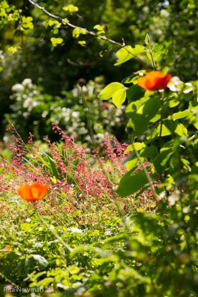 """""""Heimat"""" Garten / Charlotte Karner Mai"""
