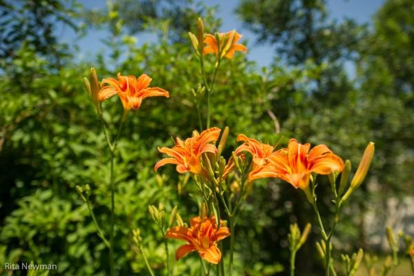 Bernhardsmühle Garten Fotos